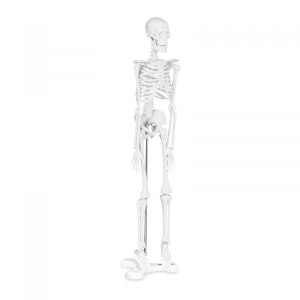 Mini model kostry človeka - mierka 1:4 (45 cm)